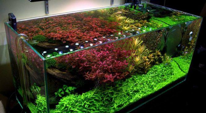 Роль аквариума в интерьере