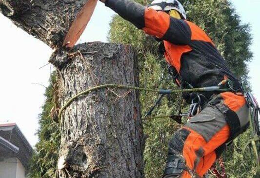 Обрезка и удаление деревьев с помощью компании Астат